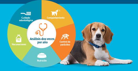 Atención médica para mascotas
