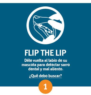 Paso 1: examinar al darle vuelta al labio