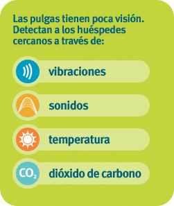 Las pulgas tienen poca visión. Sienten a los huéspedes cercanos a través de vibraciones, sonido, calor y dióxido de carbono.
