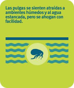 Las pulgas se sienten atraídas a ambientes húmedos y al agua estancada, pero se ahogan con facilidad.