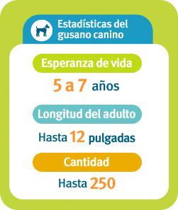 Estadísticas sobre el gusano canino: Expectativa de vida: de 5 a 7años, Longitud del adulto: hasta 12pulgadas, Cantidad: hasta 250.