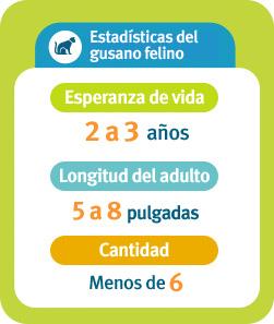 Estadísticas sobre el gusano felino: Expectativa de vida: de 2 a 3años, Longitud del adulto: de 5 a 8pulgadas, Cantidad: menos de 6.
