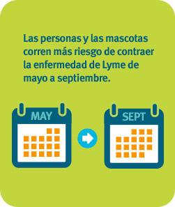 Las personas y las mascotas corren más riesgo de contraer la enfermedad de Lyme de mayo a septiembre.